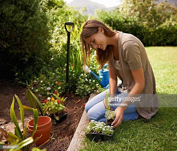 Die sorgfältige nicht zu beschädigen Pflanzen