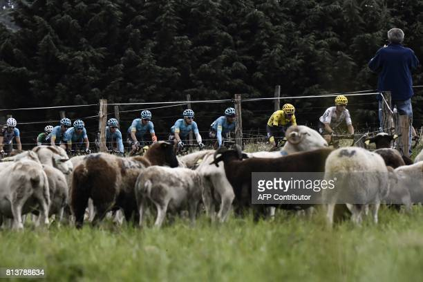Belarus' Vasil Kiryienka and his teammate Great Britain's Christopher Froome wearing the overall leader's yellow jersey ride in the pack past sheeps...