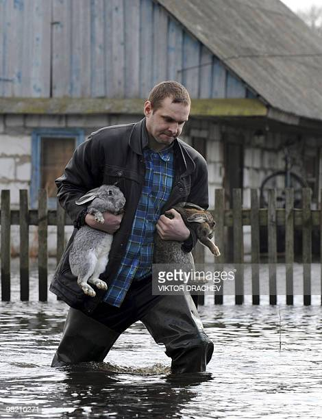 A Belarussian man carries rabbits through kneehigh water in the flooded village of Novy Sverzhan 85 km southwest of Minsk on March 27 2010 Around 150...