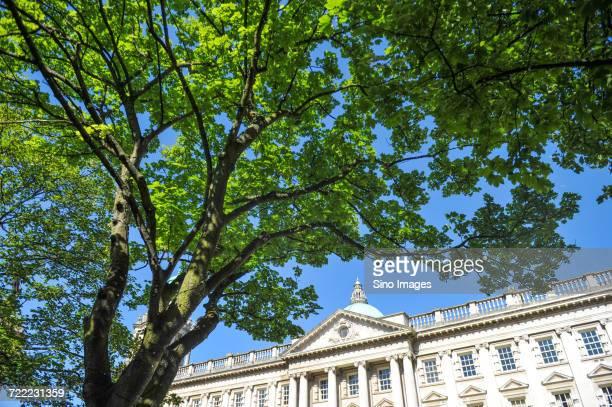 Belfast City Hall and tree, Northern Ireland