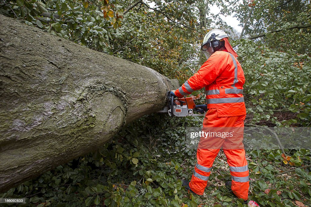 A Belgian firefighter removes a tree at the Terheidedreef after it fell and blocked a road following a heavy storm in Schoten on October 28, 2013. More than 300,000 homes were left without power across northern Europe and trains and planes cancelled as a fierce storm battered the region, leaving at least three people dead. AFP PHOTO/BELGA/KRISTOF VAN ACCOM== BELGIUM OUT ==