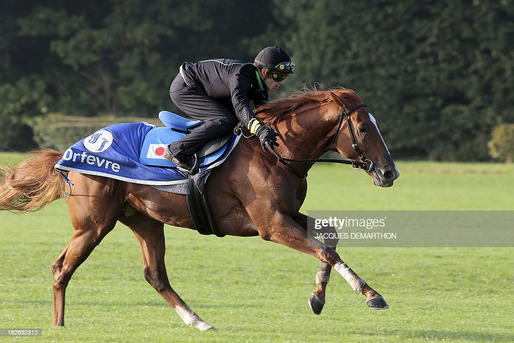 Belgian jockey Christophe Soumillon rides Orfevre during a training session in Chantilly, north of Paris, on October 2, 2013 ahead of the Qatar Prix de l'Arc de Triomphe on October 6, 2013.