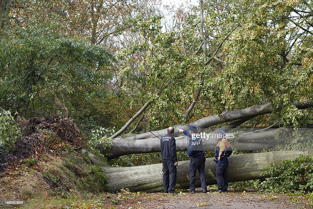 Belgian policemen inspect the site where trees fell and blocked a road following a heavy storm in Schoten on October 28, 2013. More than 300,000 homes were left without power across northern Europe and trains and planes cancelled as a fierce storm battered the region, leaving at least three people dead.