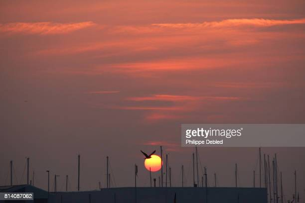 Belgium, West Flanders, Blankenberge, Seagull flying into sunset