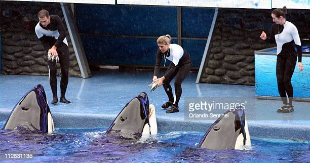 Believe The Spectacular Shamu Show resumes February 27 at SeaWorld's Shamu Stadium three days after a killer whale pulled veteran trainer Dawn...