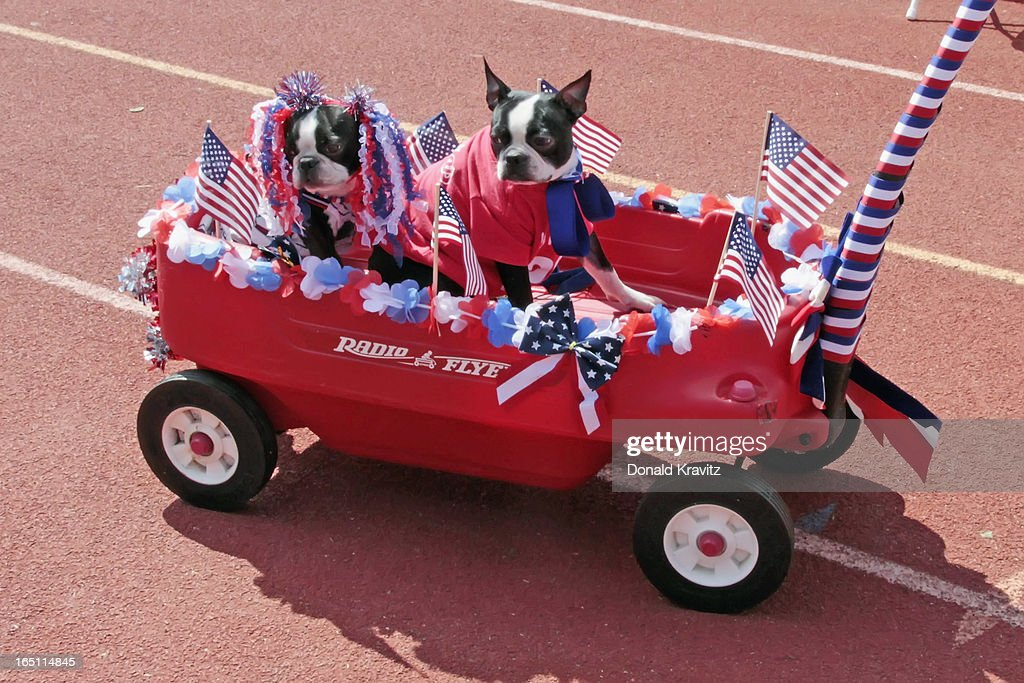 Bella and Bruno, both Boston Terriers, in wagon attend the Woofin Paws pet fashion show at Carey Field on March 30, 2013 in Ocean City, New Jersey.