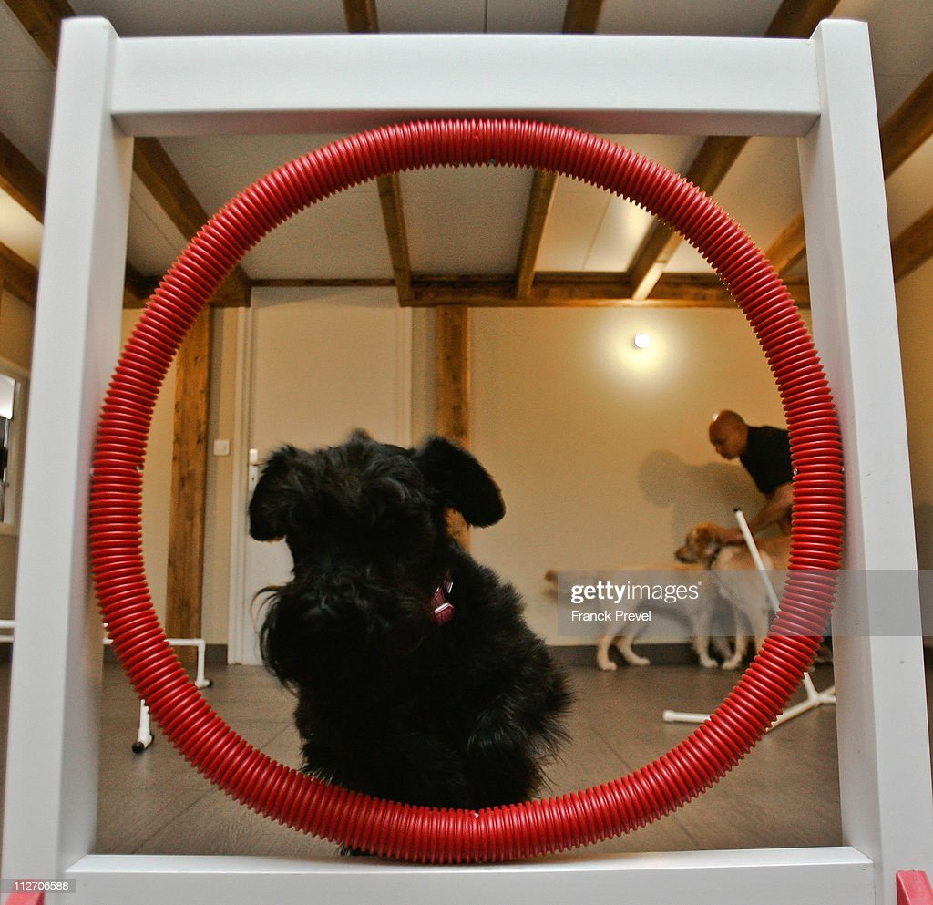 'Belle', a schnorrer jumps through a hoop in the game room at Actuel Dogs on April 19, 2011 in Vincennes, France. Opened in November 2010 by Devi and Stan Burun, Actuel Dogs is a five-star luxury hotel for dogs with four single rooms and two suites. With the aim of meeting the dogs' needs, the hotel offers activities including doggy walks, doggy rando'(hiking), doggy jogs, doggy velo'(running next to a bike) and other services such as dog massage. The hotel also caters to the needs of people living in small appartments or who don't have the time to walk their dogs.