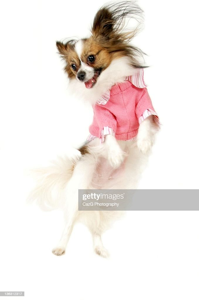 Belle in the Air. : Stock Photo