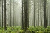 Bellever forest, Dartmoor