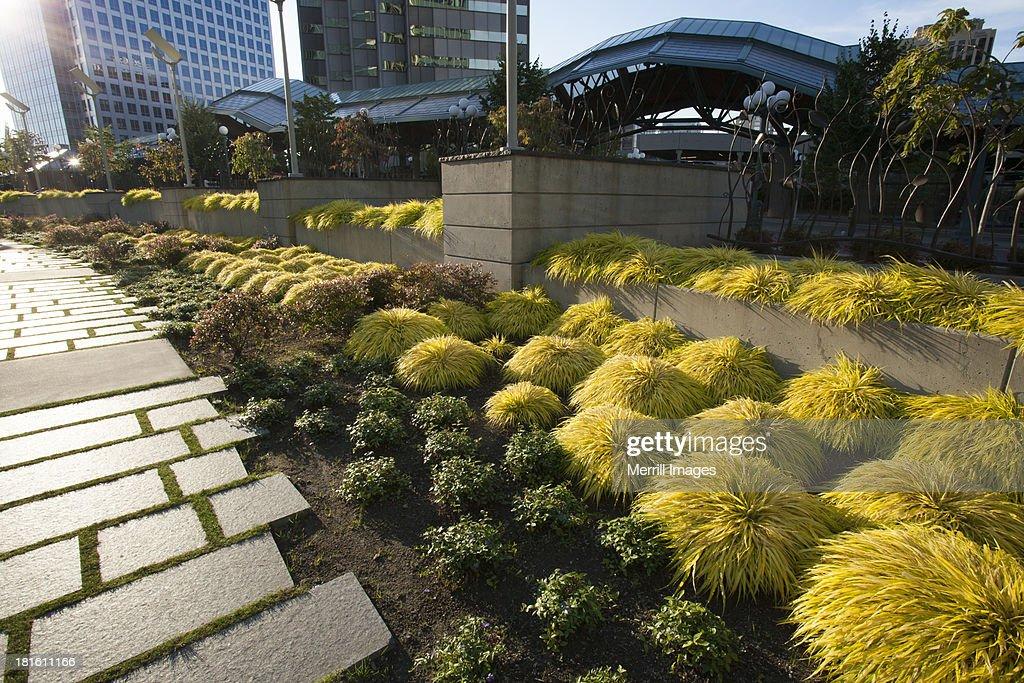 Bellevue Urban Garden