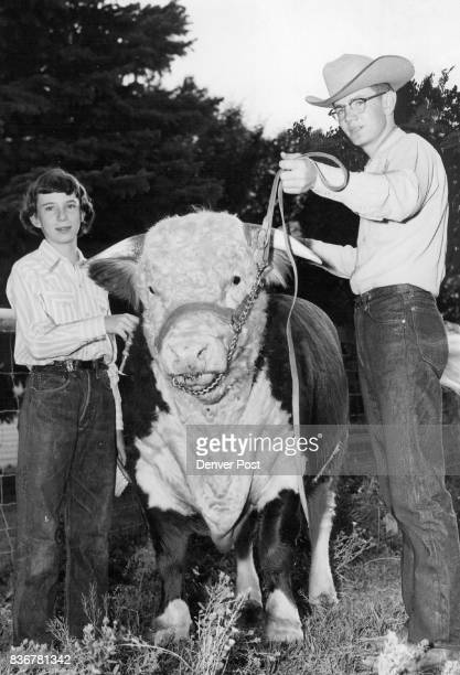 Ben Franklin and his sister Diane pose with Ben's champion Hereford bull at the Rio Blanco county fair Young Franklin also won several awards in the...