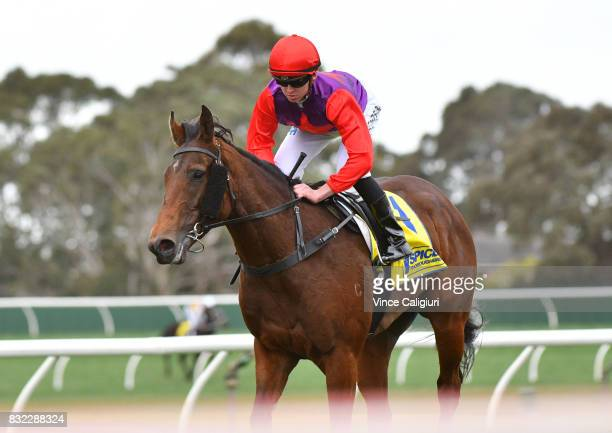 Ben Thompson riding Justice Glory after winning Race 4 during Melbourne Racing at Sandown Lakeside on August 16 2017 in Melbourne Australia