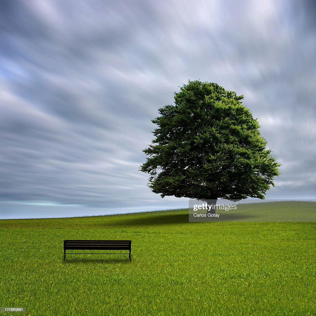Bench and tree in field of grass : Stock Photo