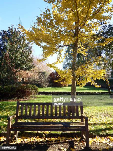 bench in a park in the shade of a tree
