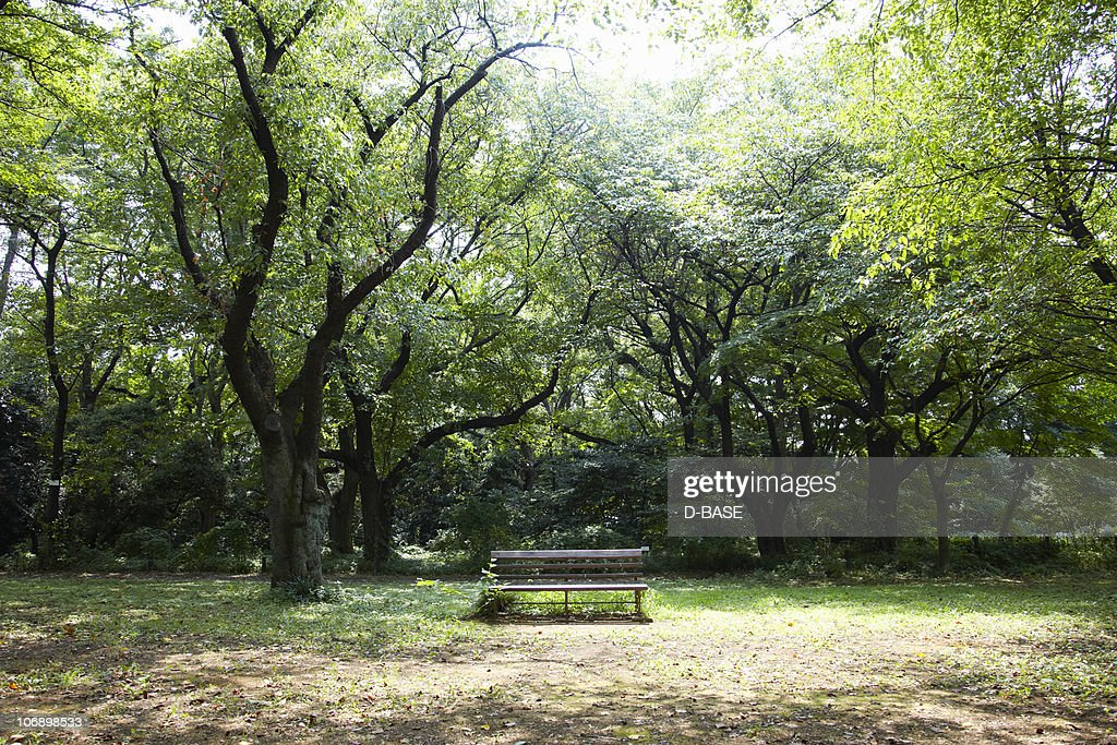 Bench in forest. : Stock Photo