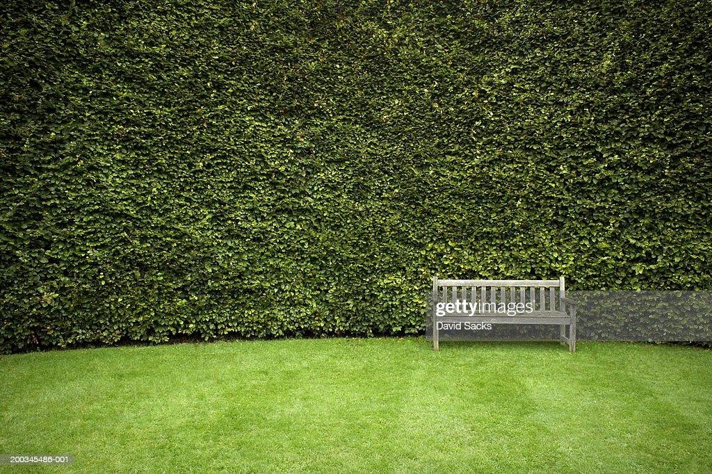 Bench in garden : Stock Photo