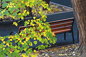 Bench in the autumn park. Birch branch in the foreground. Golden autumn. Selective focus, close-up.