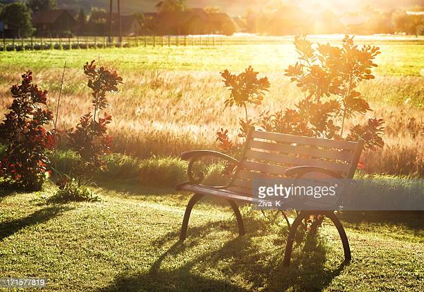 Bench in the summer