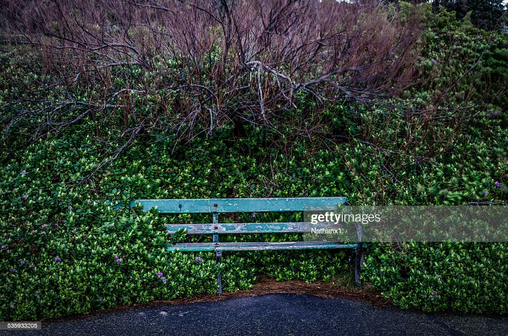 bench on sea front coverd with plants, colour image : Stock Photo
