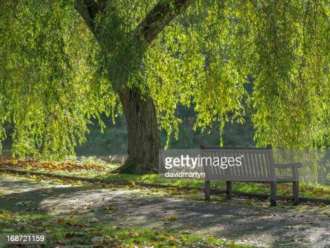 bench : Stock Photo