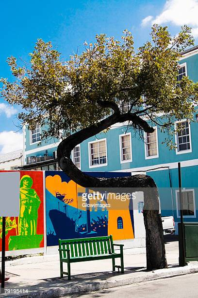 Bench under a tree, Bay Street, Nassau, Bahamas