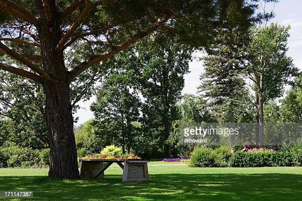 Bench Under Shade Tree in Landscaped Garden
