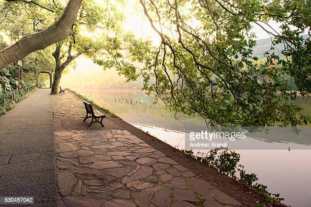 Bench under tree canopy at West Lake shore in Hangzhou, Zhejiang, China, Asia