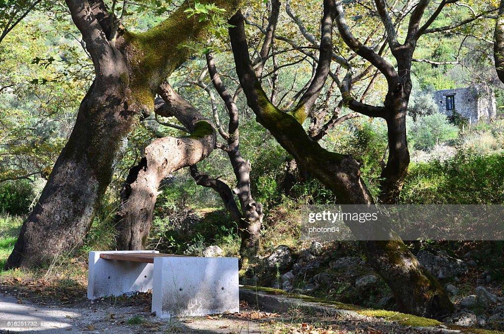 Banco en los árboles : Foto de stock