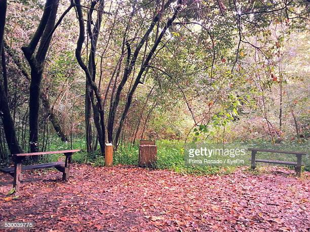 Benches In Forest