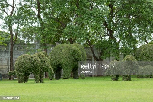 Bending elephant trees : Stock Photo