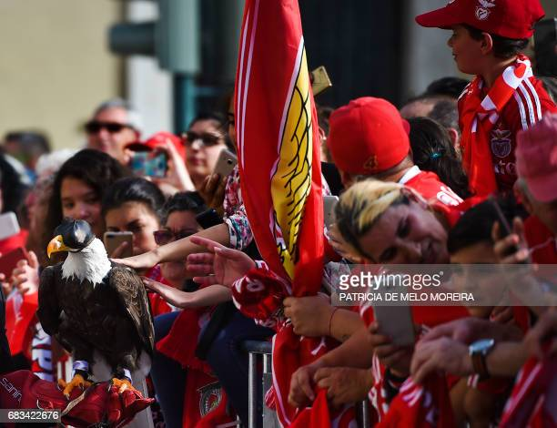 Benfica supporters touch their team's mascot a bald eagle as they wait for their team to arrive at Lisbon's City Hall to celebrate their team's...