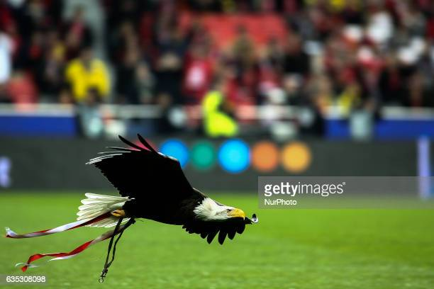 Benficas eagle Vitoria flies over the pitch moments before the Champions League football match between SL Benfica and Borussia Dortmund at Luz...