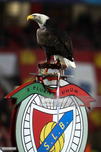 Benficas eagle Vitoria stands moments before the Champions League football match between SL Benfica and Borussia Dortmund at Luz Stadium in Lisbon on...