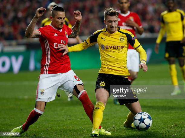 Benfica's midfielder Ljubomir Fejsa vies for the ball with Dortmund's midfielder Marco Reus during Champions League 2016/17 match between SL Benfica...