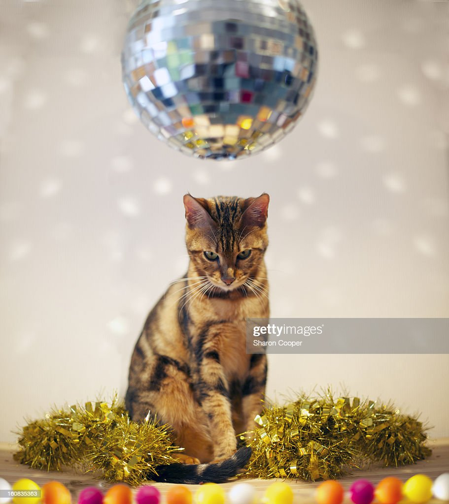 smallest cat species