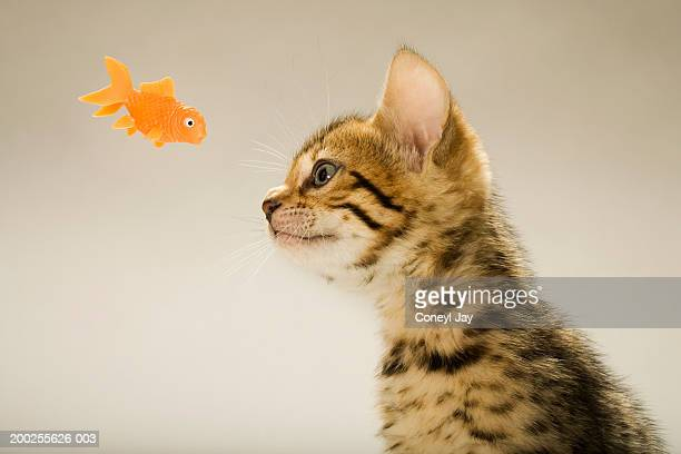 Big pussy stock photos and pictures getty images for Fish in pussy