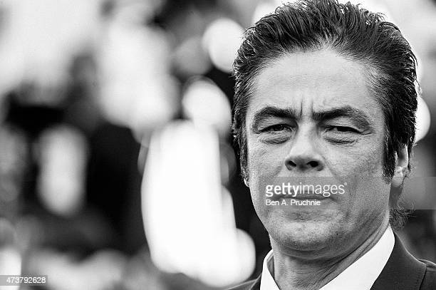 Benicio del Toro attends the 'Carol' Premiere during the 68th annual Cannes Film Festival on May 17 2015 in Cannes France