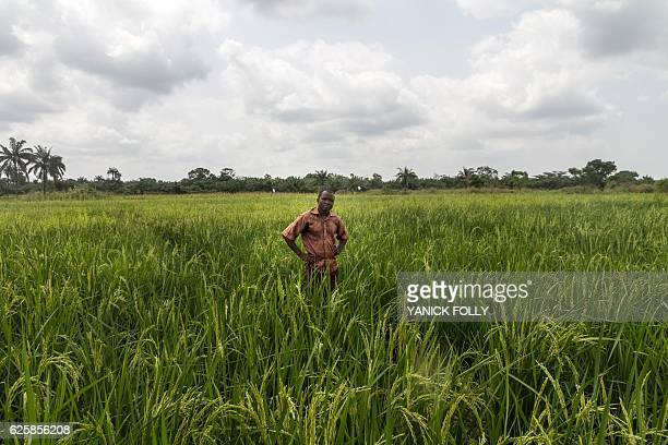 Benin cultivator Janvier R stands in a ricefield in a 'Smart Valleys' benefitting from new irrigation system on November 21 2016 in Ouinhi...