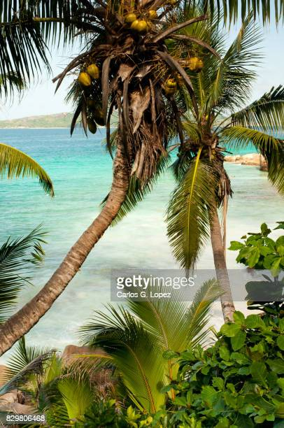 Bent palm tree and turquoise sea