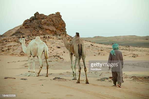 Berber and camels in the morning