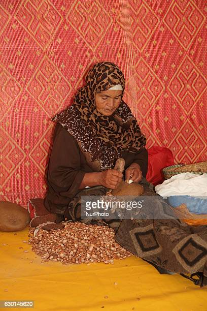 Berber woman opens argan nuts with rocks to get to the kernels for making argan oil at the argan oil cooperative in Morocco Africa on 17 December...