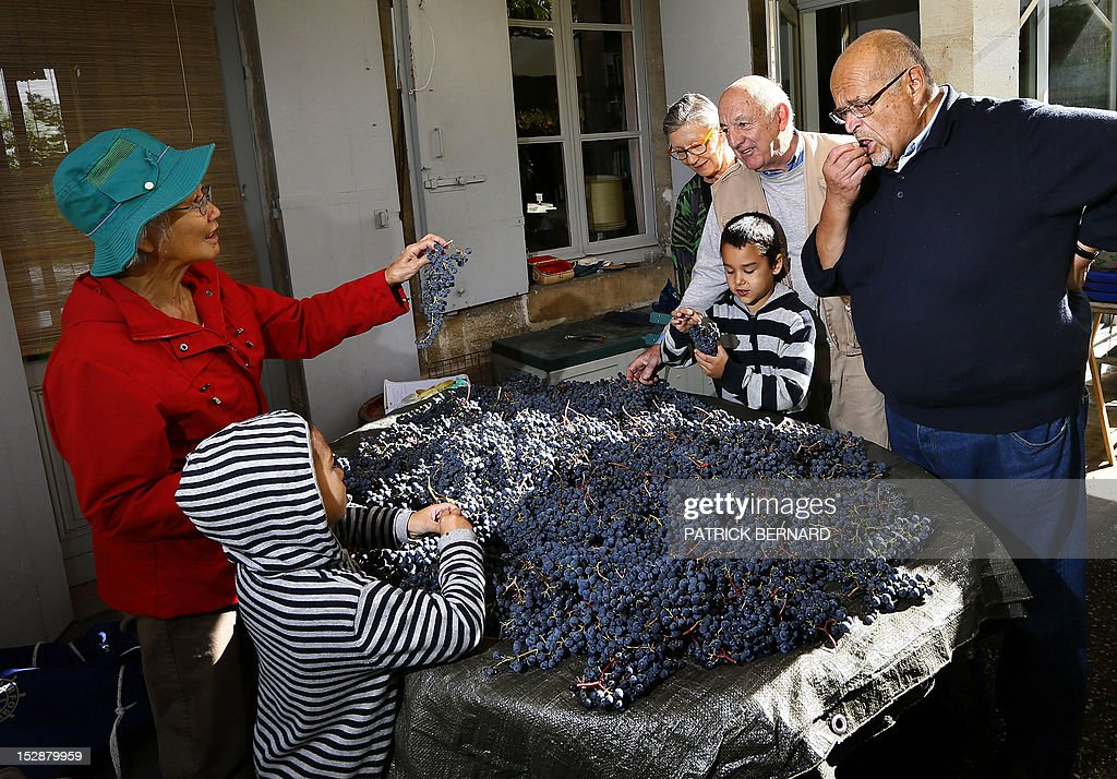 FRAYSSE - Berenice Chang Ricard (L) and relatives of the family prepare the grapes they harvested in the garden of their house to make wine, on September 27, 2012 in Bordeaux, southwestern France. AFP PHOTO/ PATRICK BERNARD