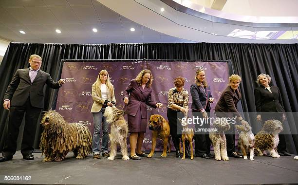 Bergamasco Berger Picard Boerboel Cirneco dellEtna Lagotto Romagnolo Minature American Shepherd and Spanish Water Dog breeds are displayed during the...