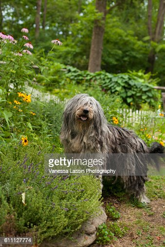 Bergamasco Garden : Stock Photo