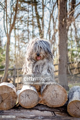 Bergamasco Pyramid : Stock Photo