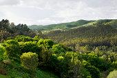 'Berkeley Hills - San Francisco Bay Area, Calfornia'