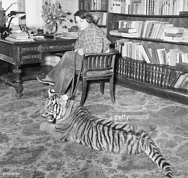 Tiger Rug Stock Photos And Pictures