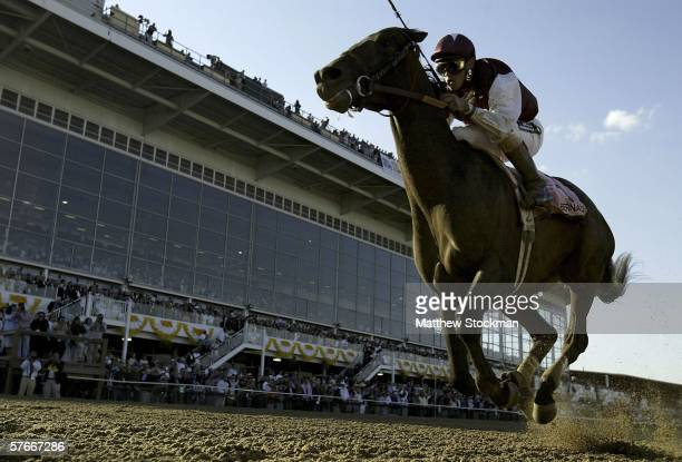 Bernardini riden by Javier Castellano crosses the finish line to win the 131st Preakness Stakes May 20 2006 at Pimlico Race Course in Baltimore...