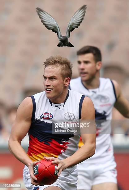 Bernie Vince of the Crows nearly gets hit by a pigeon during the round 12 AFL match between the Richmond Tigers and the Adelaide Crows at Melbourne...