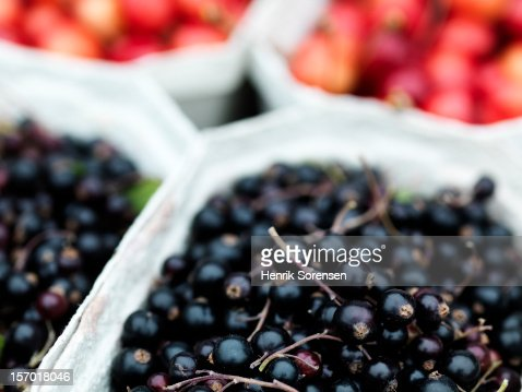 Berries : Foto de stock